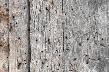 altes Holz mit Holzwurm