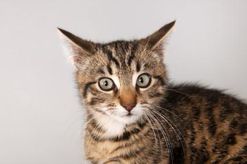 Portrait little striped cat