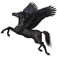 Black Pegasus Profile