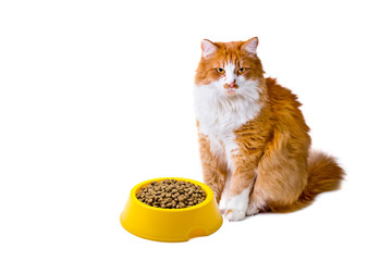 Orange and white cat with cat food
