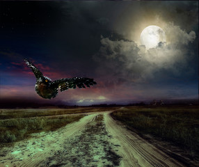 Fotobehang Volle maan road in the night and owl