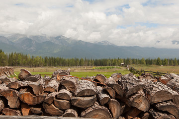 Wall Murals Sheep Fire wood combined by a stack against mountains.