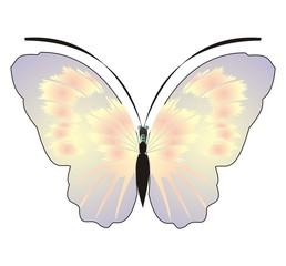 Farfalla 2 Giuseppe