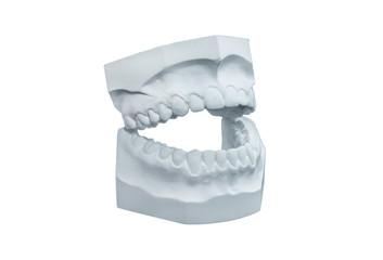 Dental plaster cast on white background