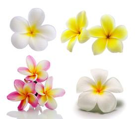 In de dag Frangipani Tropical flowers frangipani (plumeria) isolated on white backgro