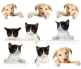 puppy and kitten set