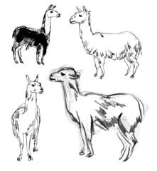 Lama. Set. Hand-drawn