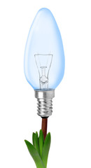 Light bulb on plant isolated on white -