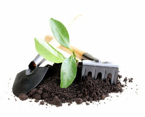 green plant grows from the ground with garden tools