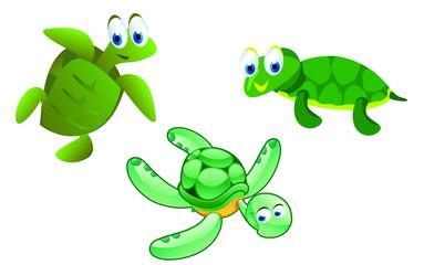 kinds of turtle cartoon