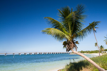 Palm at Bahia Honda Beach