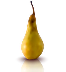 vector illustration of pear