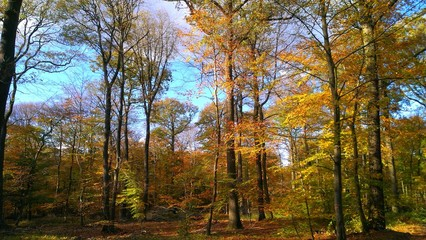 Herbst Wald