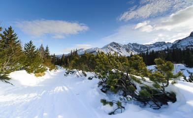 Fototapete - Winter in Polish High Tatras