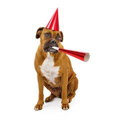 Boxer Dog Party Hat and Horn