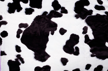Black and white cow skin