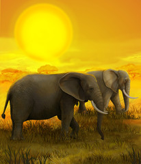Safari - elephant - illustration for the children