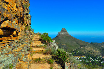 Table Mountain and Lion's Head Wall mural