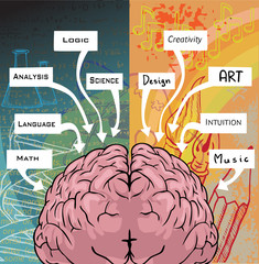 Left and right side of the brain, logic and creativity