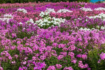 Pattern of Flower