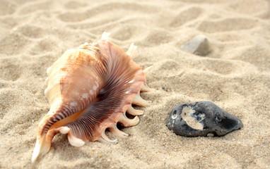 Seashell and stone on beach sand