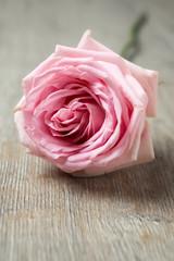 Rosafarbene Rose auf Holz
