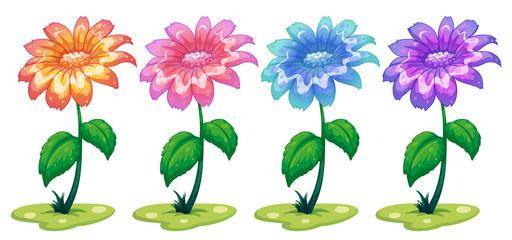 Six colorful flowering plants