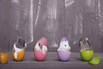 vier Osterhasen im Ei