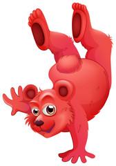 A red bear doing a handstand