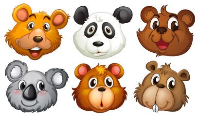 Six heads of bears