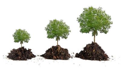 Spoed Foto op Canvas Olijfboom Growth of trees