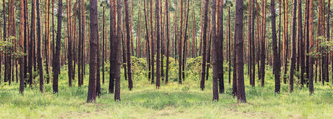 Wall Murals Forest forest