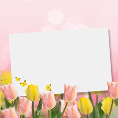 Fresh tulips on pink background.