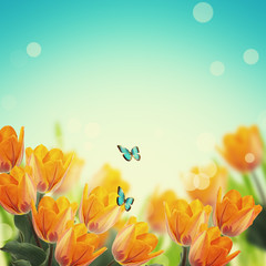 Postcard with elegant  flowers tulips  and empty  place for your