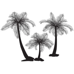 silhouette palm trees with leaves