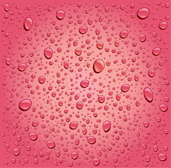 pink rose water droplets background