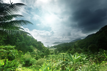 Wall Mural - jungle of seychelles island