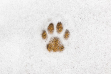 Kitty footprint in the snow