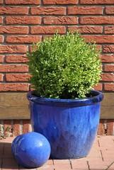 Grünpflanze im Topf vor Hauswand