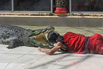 crocodile and animal trainer