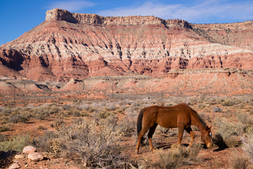 Domestic Animal Livestock Horse Grazes Desert Southwest Canyon