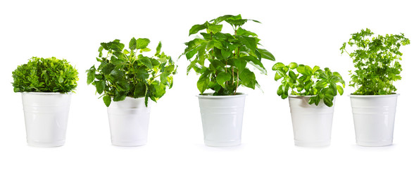 Photo sur Aluminium Vegetal set of potted green plants