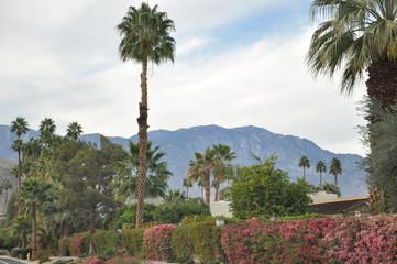 Palm Desert in California