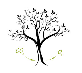 Plant Respiration - Oxygen Flow