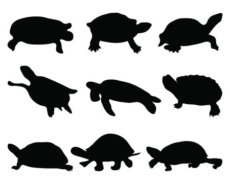 Black silhouettes of turtle, vector