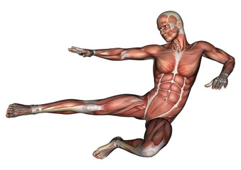 Male Anatomy Figure