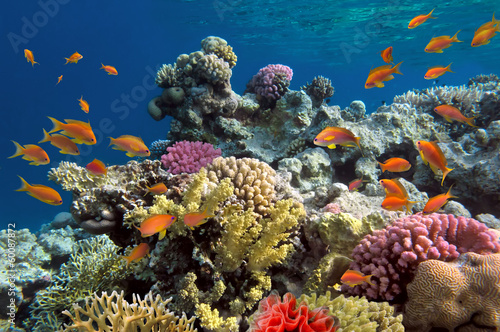 Fototapete Underwater shoot of vivid coral reef with a fishes