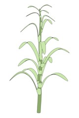 cartoon image of corn stalk