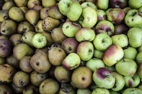 Pink Lady apple with seckel pears