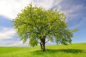 Spring landscape with tree